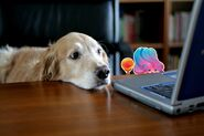 Jelly Queen and dog are waiting for Candy Crush Jelly Saga to be released