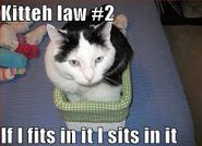 Cat Kitteh