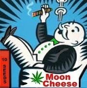 Moon Cheese Art