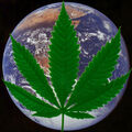 Earth cannabis.jpg