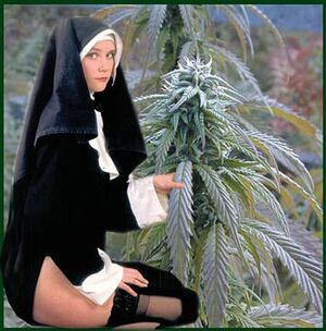 Cannabis nun