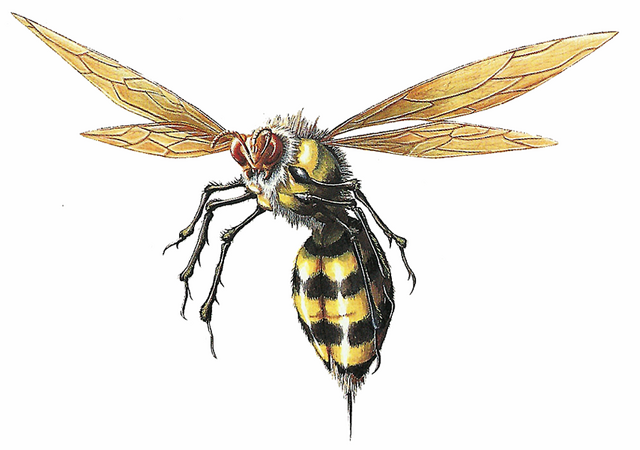 File:RE Wasp.png