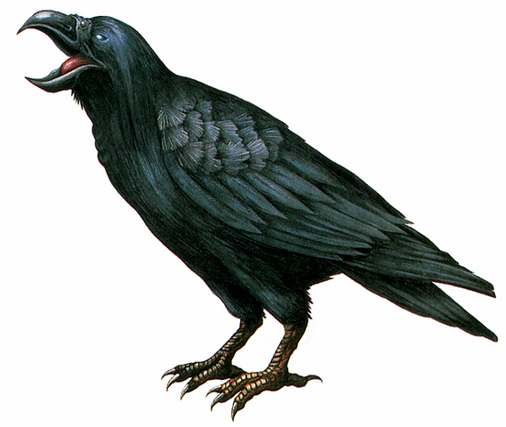 File:RE Crow.png
