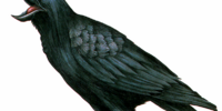 Crow (Resident Evil)
