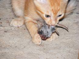 Why Do Cats Eat Their Kittens
