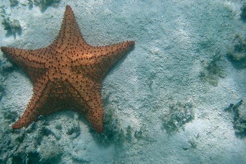 File:Starfish.jpg