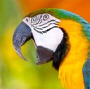 Talk-like-parrot