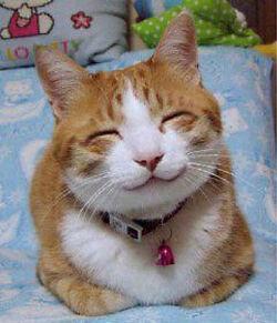 Happy cat.jpg