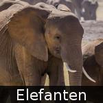 DE-Tiere-elephants