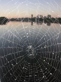 SpiderWebSkyline-1