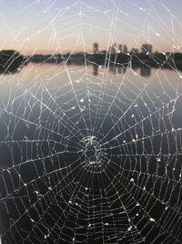 SpiderWebSkyline-1
