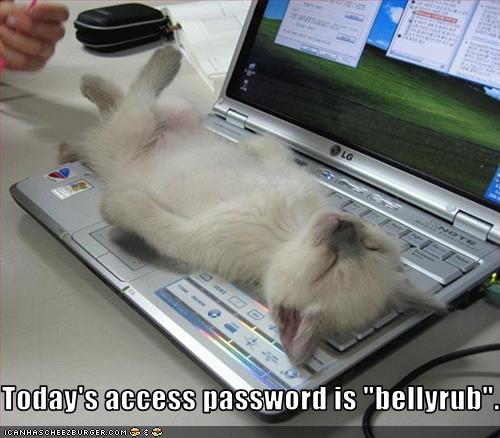 File:Lolcatpassword.jpg