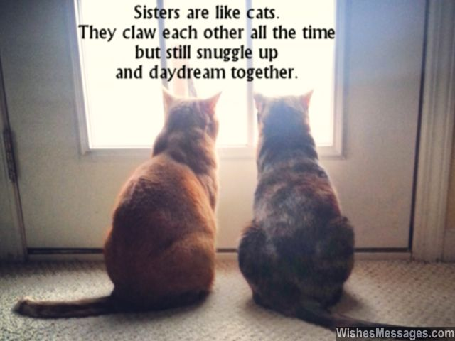 File:Cute-sisters-day-greeting-card-quote-about-sisters-being-cats.jpg