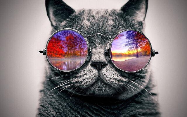 File:Cool cat xdddd.jpg