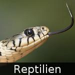 File:DE-Tiere-reptiles.jpg