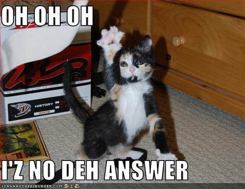 File:The Cat Knows The Answer.jpg