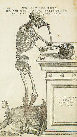 File:Vesalius-copy.jpg