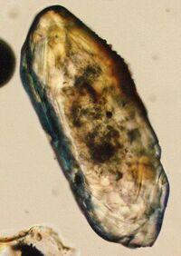 Zircon microscope.jpg