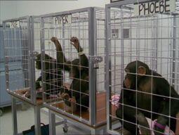 MonkeysMain