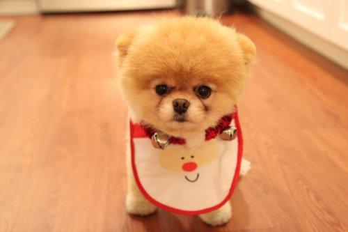 File:Doggie.jpg