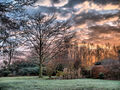 Winterly Sunrise in Garden.jpg