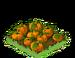 Pumpkins Fruit