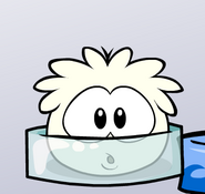 White Puffle Frozen