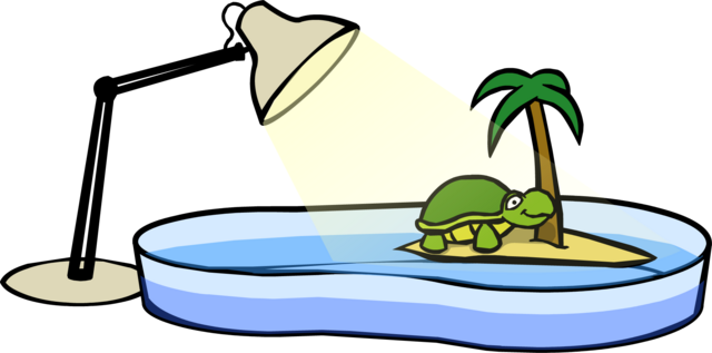 File:Turtle Bowl.PNG
