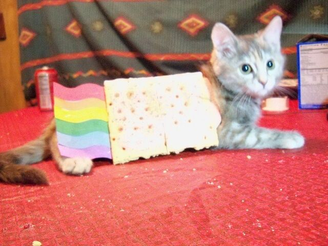 File:Nyan Cat real life.jpg