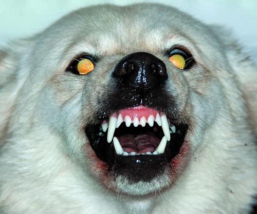 File:My dog.jpg