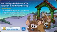 Member reindeer puffles