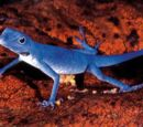 Lagarto azul de Gorgona