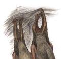 Murciélago de bonete guyanés