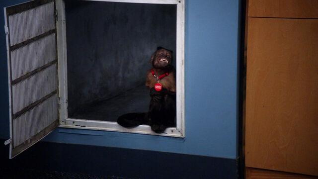 File:2x21 Annie's Boobs 14.jpg