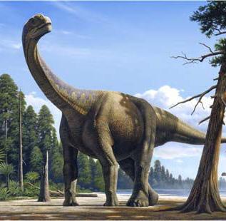 Camarasaurus cool dino facts wiki fandom powered by wikia - Dinosaure diplodocus ...