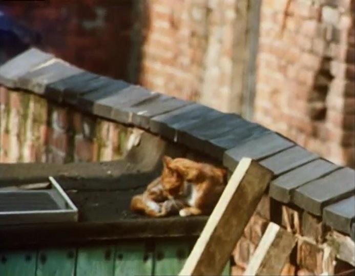 File:Titles cat.jpg