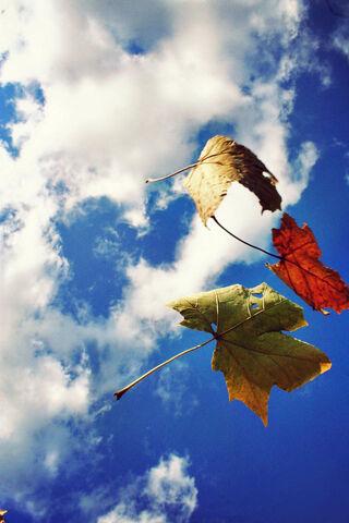 File:Leaves.jpg