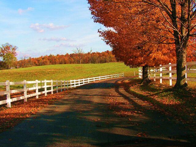 File:Autumn scene 4.jpg