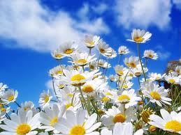File:Spring pic3.jpg