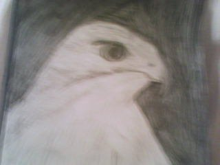 File:My drawings3.jpg