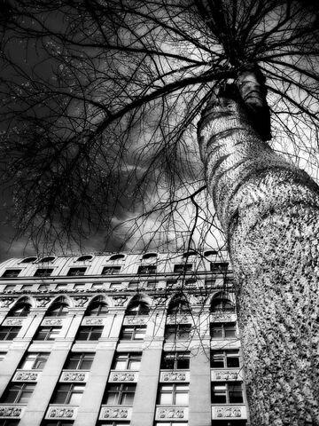 File:Tree building dark.jpg