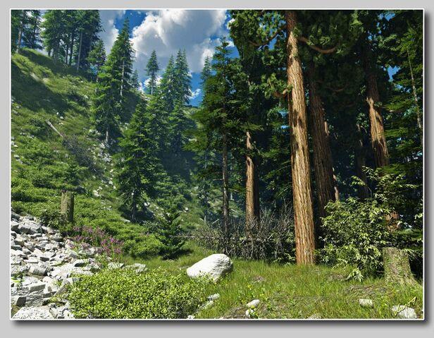 File:Mountainforest.jpg