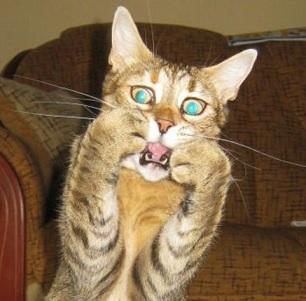 File:Scared cat.jpg
