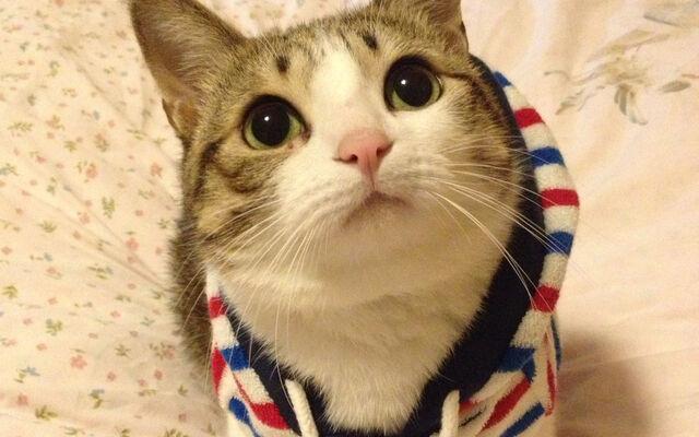 File:Cats5.jpg