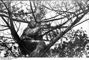 Sniper in the tree