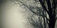 Demons in the Fog
