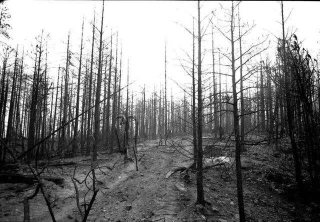 File:Slender forest.jpg