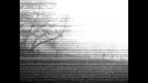 Cervine birth - audio (edit)
