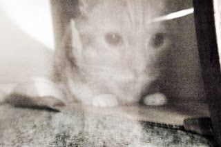 File:Ghost cat.jpg