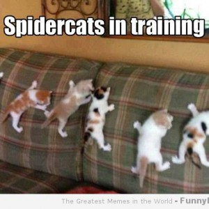 File:Spider cats in training.jpg